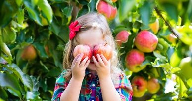 Стресът срива детския имунитет. Какво го подсилва? С посещението на детската градина децата започват да боледуват въпреки старанието на родителите да ги предпазят. Листните зеленчуци съдържат много антиоксиданти, бетакаротин и витамини така необходими за здравия имунитет. Такива са зелето, карфиолът, броколите, спанакът. Чесънът и лукът, макар и децата да не ги хареснват, трябва да хапват от тях, тъй като те предпазват от респираторни инфекции и стомашно-чревни разстройства. Това се дължи на съединенията на сяра в тях. Следвай ме - Здраве.