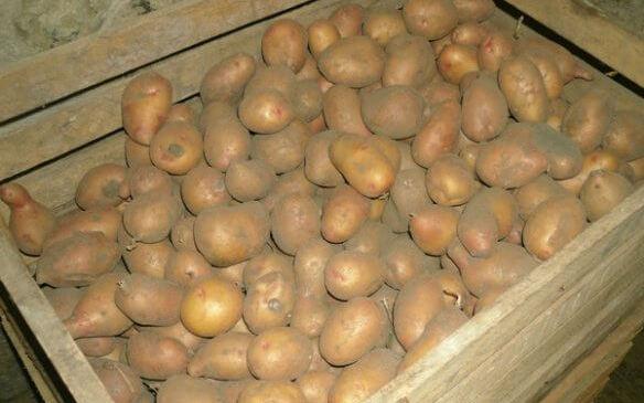 Трикове за съхранение на картофите Ако имате подходящо мазе или зимник, съхранението може да бъде в насипно състояния под формата на пирамида, в щайги или в платнен или плетен (на дупки) чувал. Сайтът на Силвето. Следвай ме - У дома.