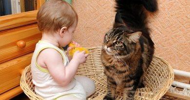 Детето отдавна ви моли да вземете котенце вкъщи, но вие се безпокоите дали те ще си допаднат или между животинката и хлапето ще има всекидневни конфликти. Такова съжителство е не само допустимо, но и препоръчително по няколко причини. Ако малчуганът вече ходи, животинката ще му стане не само верен другар, но и своеобразно учебно пособие за света. Следвай ме - У дома