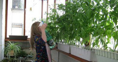 Ферма на балкона. Да се наслаждават на зеленчуци, подправки и всякакви ядливи растения могат и градските жители, които живеят в апартаменти. Достатъчно е те да си направят мини ферма на закрития балкон или на перваза на прозореца. Какво е необходимо за нея? Най-напред да изберете съда, в който ще отглеждате вашите растения. Можете да ползвате глинени саксии или сандъчета за цветя. Можете и да си сковете сандък специално за вашите култури в градски условия. Следвай ме - У дома