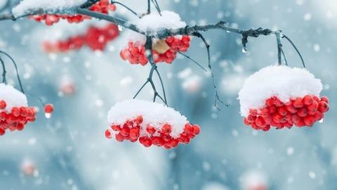 Сняг ще вали през нощта в петък срещу събота в цялата страна. Само в Югоизточна България ще вали дъжд, съобщиха от Националния институт по метеорология и хидрология при БАН. От Планинската спасителна служба при БЧК предупреждават да не се предприемат необмислени походи без опитен водач, зареден телефон и добра екипировка. Следвай ме - Общество