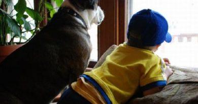 Кучето вкъщи прави детето по-уверено С домашния любимец то преодолява срамежливостта Животинката у дома ни отучва да разхвърляме вещи Научава ни да живеем здравословно, прави ни открити. Следвай ме - У дома