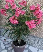 Отглеждаме десетки отровни растения у дома. Кои са те. Следвай ме - У дома