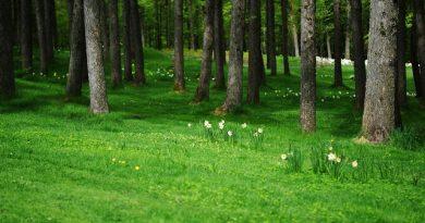 Облачно време с дъжд, а на места и с гръмотевици. Такава ще бъде метеорологичната обстановка в Западна България в четвъртък, на 24 май. Следвайме - Общество