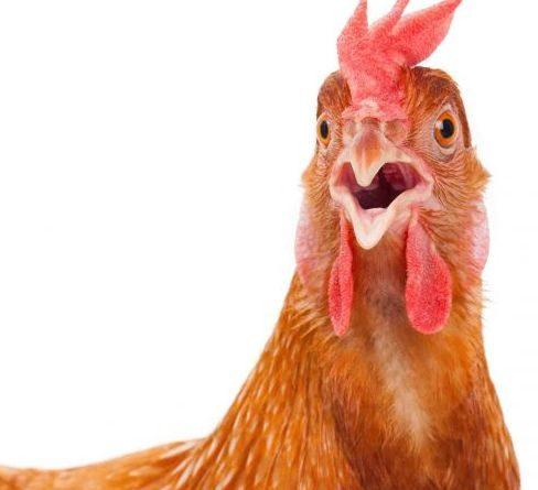 Как да се предпазим от птичия грип? Вижте какво ни съветва Министерството на здравеопазването. Следвай ме - Здраве