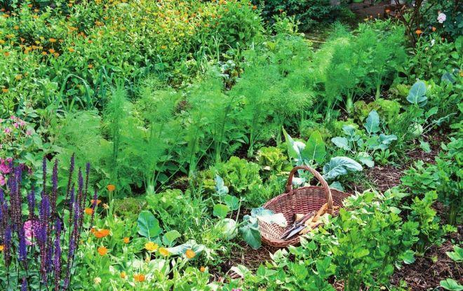 Несъвместими растения в градината. Не ги засаждайте в близост. Следвай ме - У дома