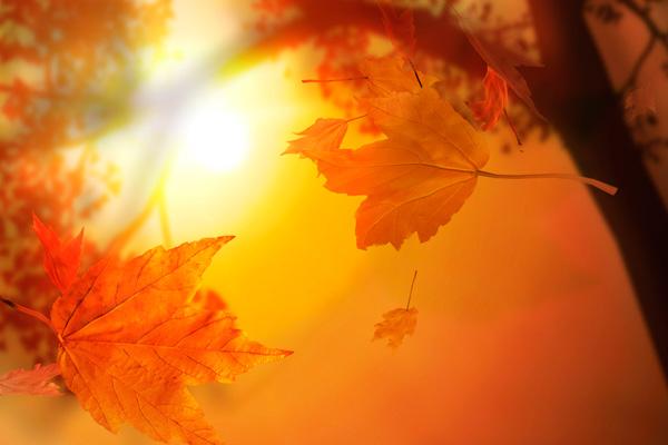 Максималните температури днес ще варират от 24°С до 29° C, в София ще са около 22° С, съобщиха от Националния институт по метеорология и хидрология (НИМХ). Следвай ме - Общество