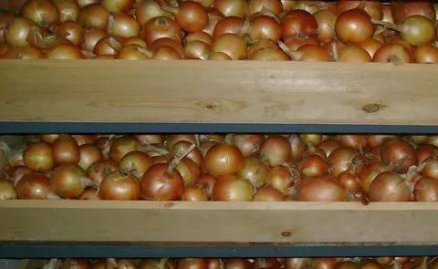 Съхранението на реколтата зависи от това, как ще подредим плодовете и зеленчуците в мазето според температурата и влажността на въздуха, която обичат. Следвай ме - У дома