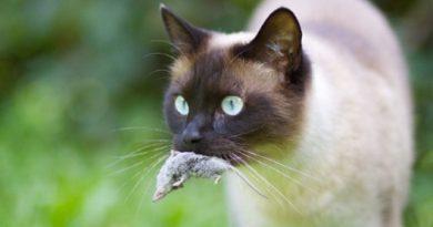 Почти във всички нации съществува вярването, че котките притежават девет живота. На практика това не е така. Тези нежни създания чувстват, страдат, боледуват, умират при инциденти, от болести и в дълбока старост точно както ние, хората. Следвайме - У дома