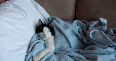 Как да откажем котката да спи в леглото ни Растението рута пъди писанката, тя повече не рие в разсада. Следвай ме - У дома