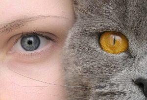 Как виждат котките? Бинокулярно. Защо? Котките са удивителни създания – движенията им са точни, обонянието остро, а зрението прекалено прецизно. Следвай ме - У дома