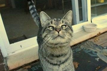 Котката киха – алергия ли е или тумор? Кихането е рефлект, присъщ на всички висши животни, както и на човека. Основното му предназначение е да защити слъзестите канали и дихателната система от негативното влияние на външните фактори. Следвай ме - У дома