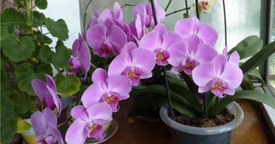 Как да пресадим орхидеята без да я повредим? Следвай ме - У дома