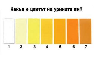 9 нюанса на урината казват здрави ли сме или болни. Урината и по-точно нейният цвят може да се насочи в каква степен на хидратация е вашият организъм или вече е в процес на дехидратация. Следвай ме - Здраве