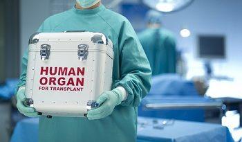 Бъбреците на трупен донор бяха трансплантирани на двама пациенти с хронична бъбречна недостатъчност. Операцията беше осъществена успешно в Александровска болница в София. Следвай ме - Здраве