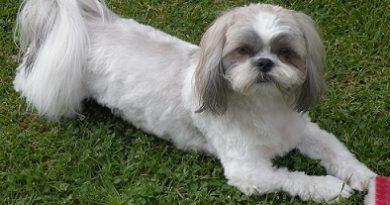 Кученце направи стопанина си милионер. Това се случи в САЩ, щата Северна Каролина, съобщи агенция ЮПИ. Следвай ме - Хоби