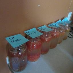 Два бързи начина за съхраняване на доматените семена. Следвай ме - У дома
