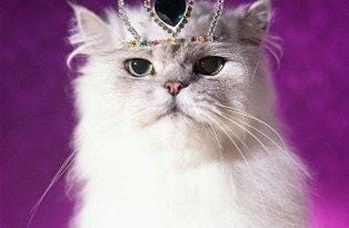 Котка и човекът – взаимоотношения, които се опитва да разгадае за себе си всеки, който има такъв домашен любимец. Впрочем, дали пък те, котките не са ни взели за свои подопечни? Следвай ме - Хоби