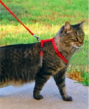 ЕС против каишките и поводите на котки. Следвай ме - Хоби