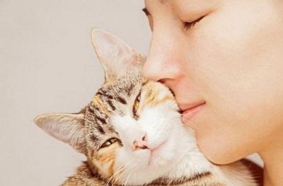 Как котките показват любовта си към нас? Котките съжителстват с човека от хилядолетия. Но, тъй като те са опитомени по-късно, се държат и значително по-независимо, демонстрират свободолюбие. Следвай ме - Хоби