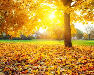 В понеделник ветровито, температури 18°С и 23°С Утре, понеделник, ще е ветровито с температури между 18 и 23 градуса, съобщиха от Националния институт по метеорология и хидрология. Следвай ме - Общество