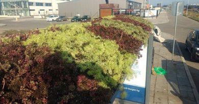 """Поставиха """"зелени шапки"""" на автобусни спирки в Бургас. Поставянето на зеленина върху автобусните спирки се прави на определени места, където няма широколистни дървета. Следвай ме - Общество"""