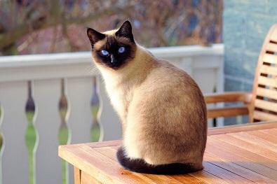 """Япония на 10-то място по отглеждане на котки, САЩ е №1. Това показва мащабно изследване на """"World Atlas"""" за страните, в които най-много се отглеждат от тези четириноги. Следвай ме - У дома/Хоби"""