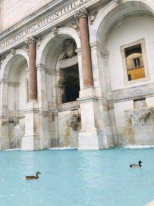 Венеция чисти води,Следвай ме - общество
