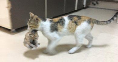 Котка потърси помощ в спешно отделение за болното си котенце. Следвай ме - Хоби/Шоу