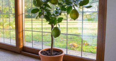 Лимон в чаша – природният ароматизатор в стаята. Следвай ме - У дома