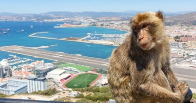 Докосването на маймуните в Гибралтар вече е престъпление Издадоха специални разпореждания, за да ги опазят от коронавируса. Следвай ме - Хоби/Шоу