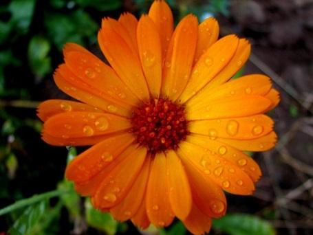 Ядливите цветя в градината и на балкона ни Цветята показват усета за красота във всеки дом неависимо дали те са в градината пред къщата или на балкона. Оказва се обаче, че много от тях са и неизменна част в блюдата на различните национални кухни. При това, те са залегнали в тях от векове заради целебните им свойства. Гурме/Здраве