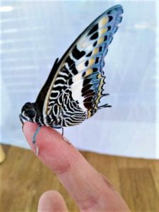 Жива изложба на тропически пеперуди в Бургас. Следвай ме - Хоби/Шоу