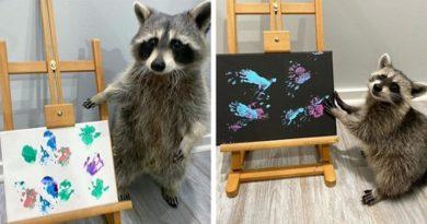 Еноти рисуват картини Стопаните им ги продават ги като шедьоври, опашка от купувачи. Следвай ме - Хоб / Шоу