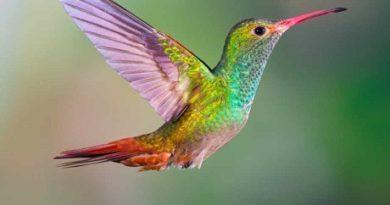 Птица е наполовина мъжка, наполовина женска Пернатото е от рядък вид, нарича се розовогърд дебелоклюн Следвай ме - Хоби / Шоу
