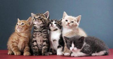 Френски депутати искат котките да бъдат вписани като вредители. Следвай ме - Общество