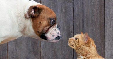 """Смела котка нападна разгневено куче и спаси живота на дете в Бразилия, пише """"Дейли стар"""". Следвай ме - Хоби / Шоу"""