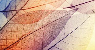 """Прозрачно дърво заменя стъклото Американски учени създадоха прозрачно дърво, което може да замени обикновеното стъкло за прозорци, тъй като е много по-здраво и се огъва и нацепва, а не се чупи на парчета при удар, съобщи в. """"Мейл он сънди"""". Следвай ме - Общество"""