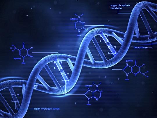 Генетична ножица променя живота изцяло Две дами получават Нобеловата награда за нея. Следвай ме - Общество