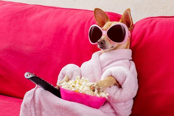 """Kакво виждат кучетата и котките, когато """"гледат"""" ТВ Стопаните на домашни любимци неведнъж са забелязвали как питомците им се """"заглеждат"""" по телевизора. Някои собственици дори могат да се закълнат, че животните следят с интерес случващото се на екрана. Следвй ме - Хоби / Шоу"""