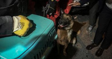 """Куче спаси котка от развалините след земетръса в Измир Издирвателно-спасително куче, рабоещо под служебен код, К-9 помогна за откриването на котка, заседнала под развалините на дом, разрушен от опустошителното земетресение в турската провинция Измир. Това съобщи вестник """"Хюриет дейли нюз"""". Следвай ме - Хоби / Шоу"""