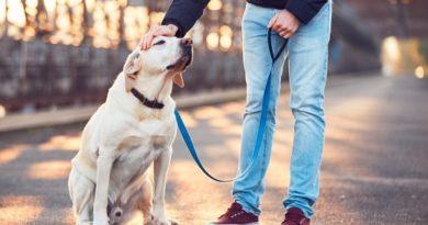 Доброволци се грижат за домашни любимци на болни от COVID-19 Докато стопаните са в болница в Италия, все някой трябва да се грижи за техните домашни любимци. Италианската асоциация за защита на животните и околната среда (LEIDAA) помага на всички собственици на кучета и котки, които са в болницата в тези трудни времена, съобщава РТС. До момента са регистрирани 2200 случая на животни, за които се грижат доброволци, ангажирани в Асоциацията за защита на животните и околната среда. Следвай ме - Хоби / Шоу