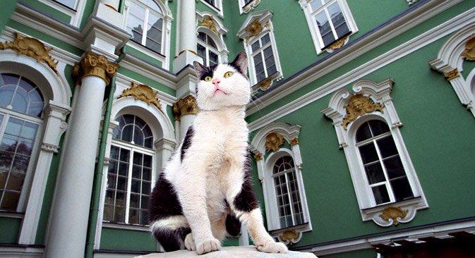 Французин завеща пари на 50-те котки в Ермитажа. Следвай ме - Хоби / Шоу