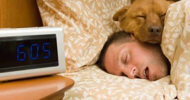Куче в леглото е полезно за човешкото здраве Котките точно обратното – будят често стопаните си. Следвай ме - Хоби / Шоу