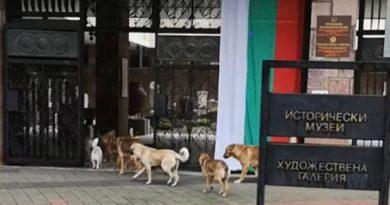 """Глутница кучета отидоха на музей Глутница от десетина бездомни кучета влезе в Регионалния исторически музей в Пазарджик. Любопитната случка бе заснета от случаен минувач, който я пусна в социалните мрежи с призив към общината да предприеме адекватни мерки, пише """"Марица"""". Следвай ме - Общество"""
