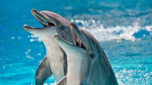 Делфините имат повече прилики с хората и примати като маймуните, отколкото се смяташе досега, Следвай ме - Хоби / Шоу