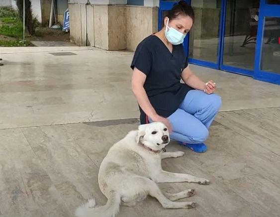 Куче чака стопанина си две седмици пред болница Безпородният Памук не се отлехял от входа на лечебното заведение. Следвай ме - Хоби / Шоу