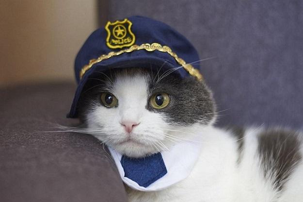 Котка със заслуги стана шеф на полицейско управление Четириногото беше на поста само един ден в японския град Тояма Следвай ме - Хоби / Шоу