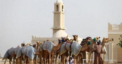 Имунизират камили срещу коронавируса в Дубай Учените откриха кои са най-податливите на заразата животни. Следвай ме - Общество