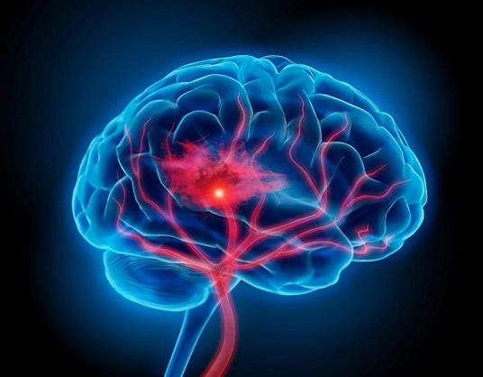 Клетки в мозъка отговарят за интуицията Те са открити от американски учени, с тях се обяснява подсъзнателното разпознаване на важни за нас лица Следвай ме - Общество